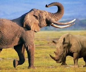 Elefantes, rinocerontes