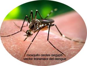 Mosquito viajero