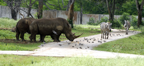 FireShot Screen Capture #158 - 'Parque Zoológico Nacional - General - Fotografía - Multimedia - Juventud Rebelde - Diario de la juventud cubana' - www_juventudrebelde_cu_multimedia_fotografia_generales_parque-zoo