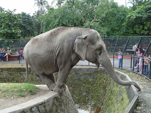 Cuba zoológico