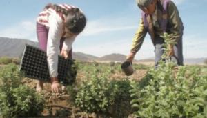 9589-niños-agricultura-eu