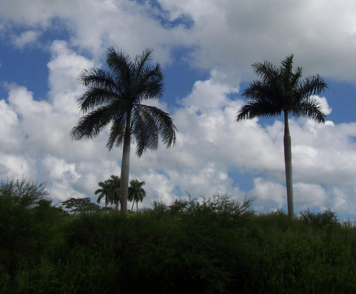 Cuba: militares, fiscales y médicos por el  crimen, el secuestro y el intento deextorsión