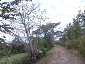 "Camino a la  ""Finca Canel"""